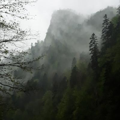 Bieganie (na) dzika w Szczawnicy